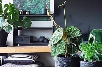 0-groene-kamerplanten-groenekamerplanten-kl.jpg