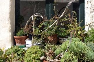 Blog: Ponza plantjes