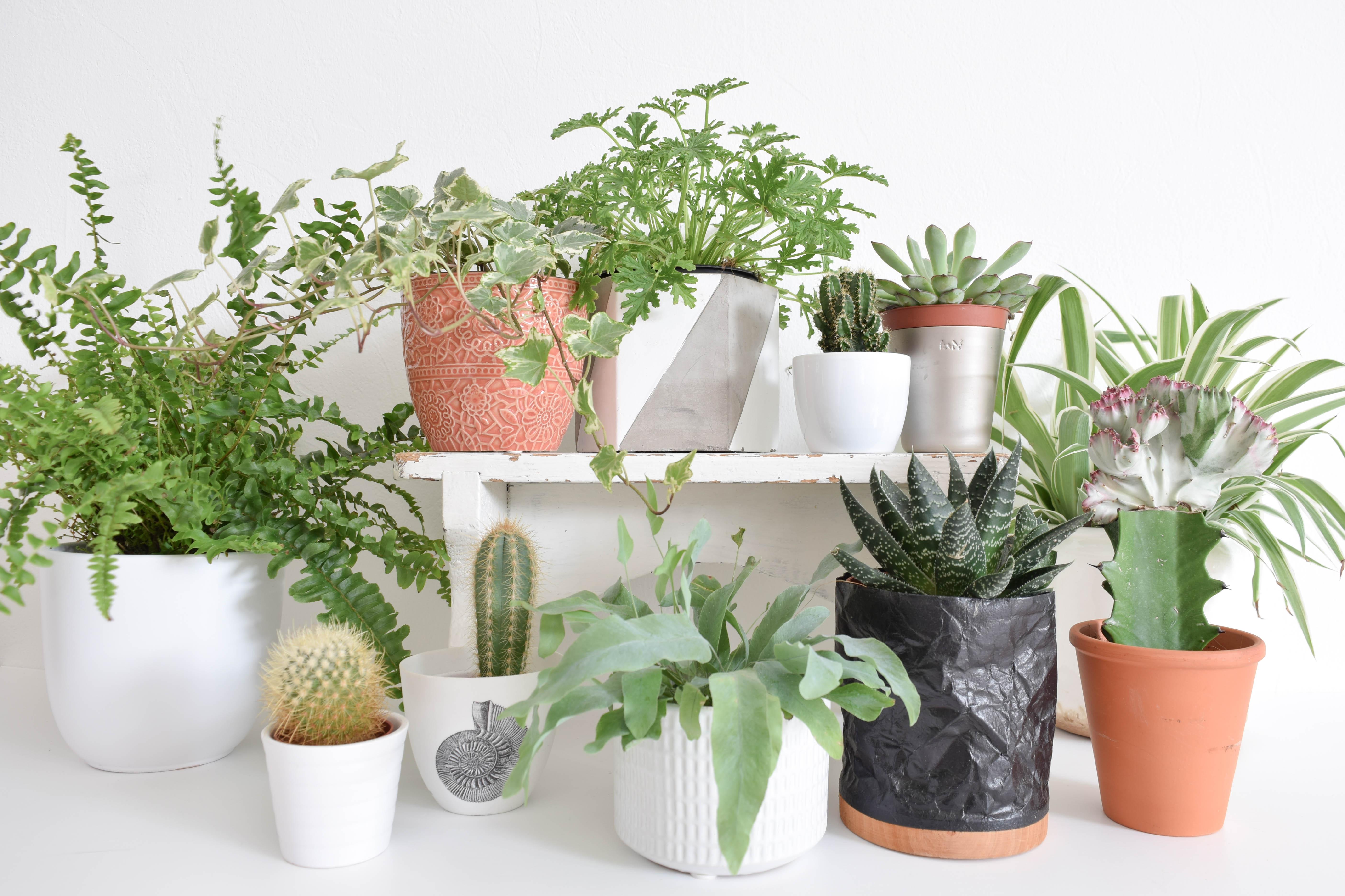 Behulpzame planten - Inspiraties - ShowHome.nl