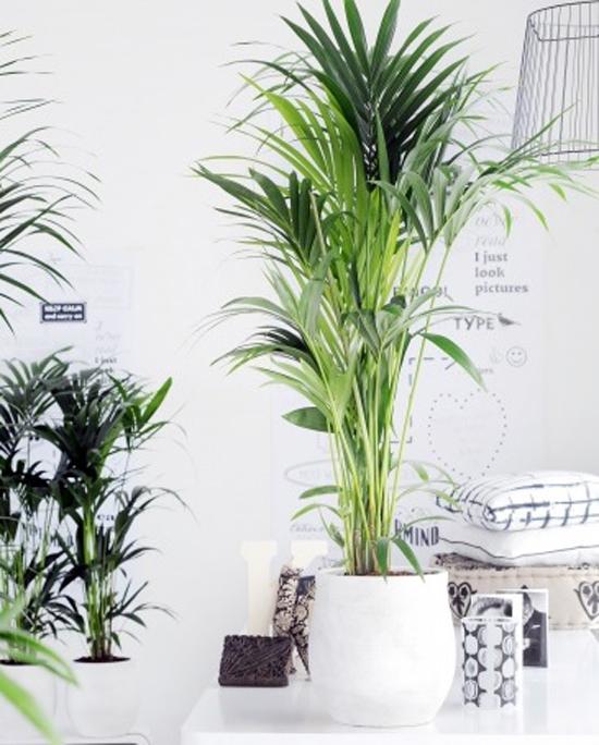 Mooi wat planten doen inspiraties for Grande plante salon