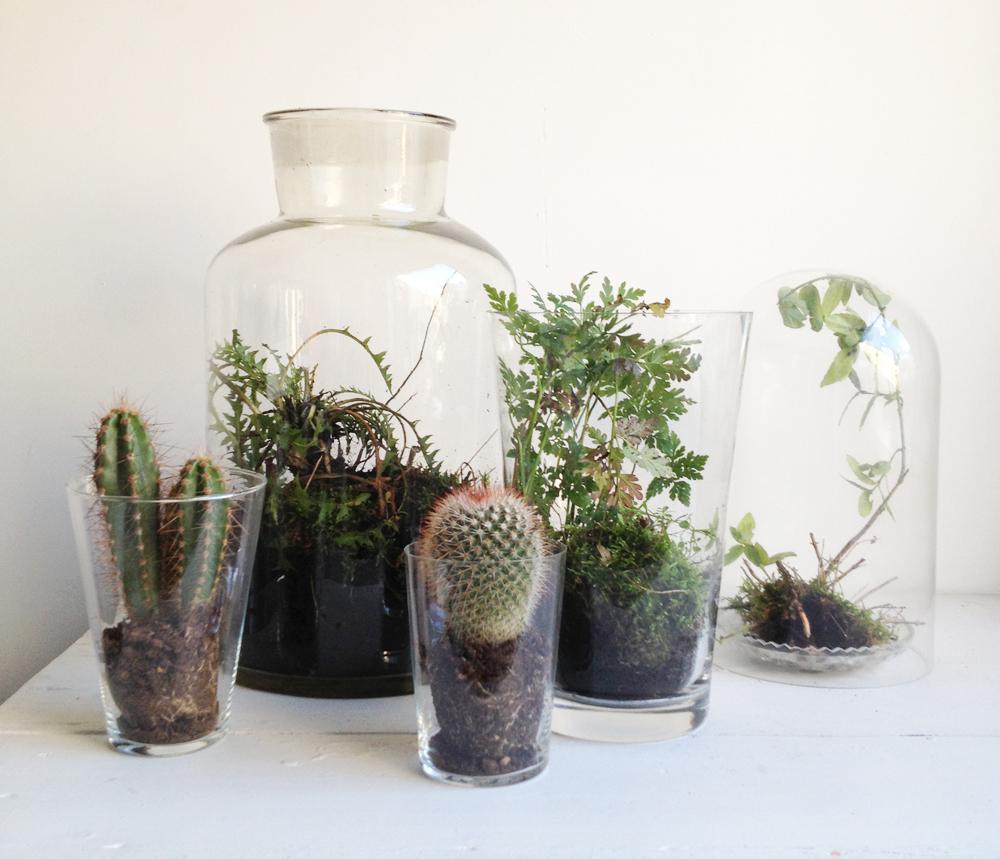 Vaak De minituin in glazen pot - Inspiraties - ShowHome.nl #HU83