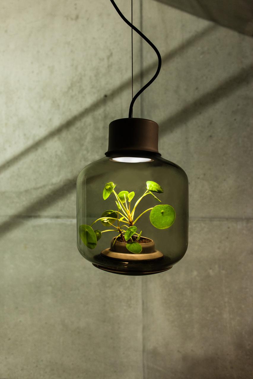 planten in een donkere ruimte - inspiraties - showhome.nl, Badkamer
