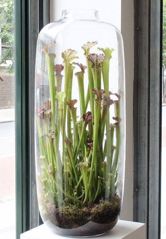 terrarium met planten inspiraties. Black Bedroom Furniture Sets. Home Design Ideas