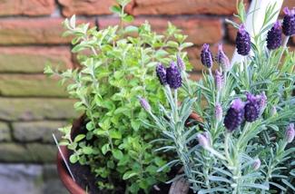 Balkon inspiratie tuin
