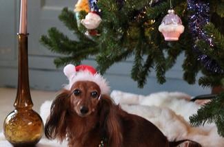 Binnenkijken bij Arlette in haar kersthuis