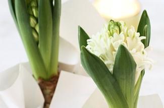 Blog: Bloemen in bollen