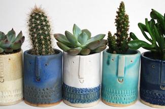 Blog: Cactus hier cactus daar