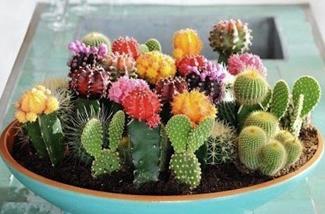 Blog: Cactus