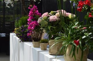 de-balkon-en-terrasplant-verkiezing-2018-kl.jpg