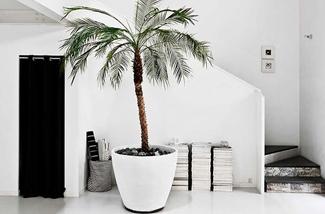 de-palmboom-trend-kl.jpg