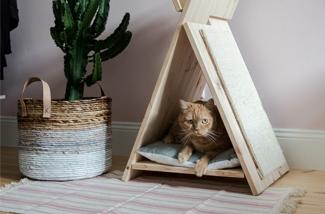 DIY voor crazy cat people