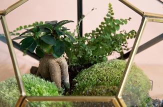 Een tuintje in je interieur
