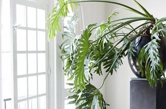 Blog: Groen in huis