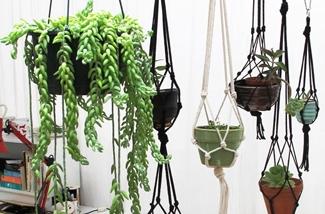 Blog: Groen in huis, mooie plantenhangers