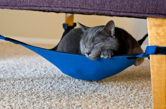 Hangmat voor je kat