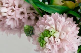 Gek op Hyacinten!