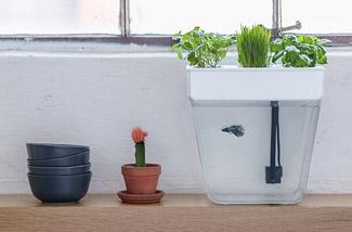 indoor-tuin-en-minivijvertje-kl.jpg