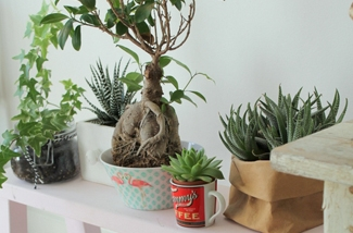 Styling voor planten