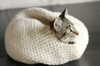 Blog: Katten in huis
