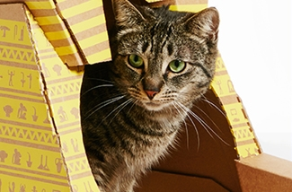 kattenspeelhuisjes-van-karton-kl.jpg