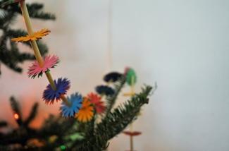 Blog: Kerstboom kiezen