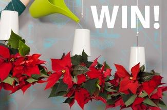 Win 1 van de 5 kerststerren pakketten!