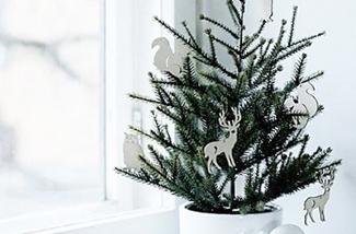 Blog: Kleine kerstboom