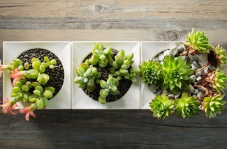 Kunstwerk met planten
