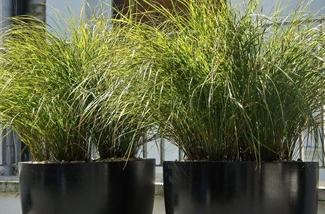 lemongrass-kl.jpg