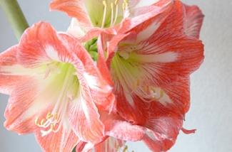 Het lente gevoel in huis met bloemen
