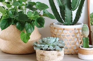 leuke potten of manden voor planten