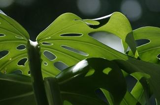 luchtzuiverende-planten-het-hele-jaar-door-gezonde-lucht-in-huis-kl.jpg