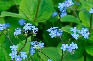 onderhoudsarme-vaste-planten-voor-je-tuin-kl.jpg