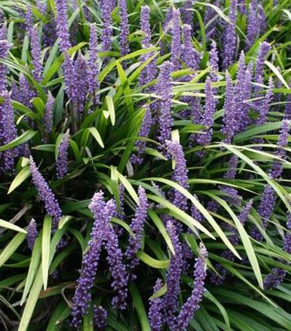 Vaste Planten Voor In De Tuin.10 X Onderhoudsarme Vaste Planten Voor Je Tuin Inspiraties