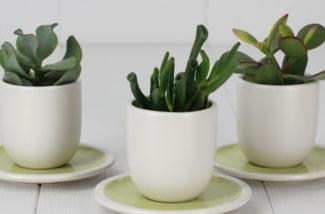 online-vetplanten-bestellen-kl.jpg