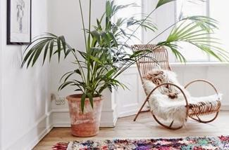 Palmboom interieur