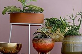 Planten door het hele huis