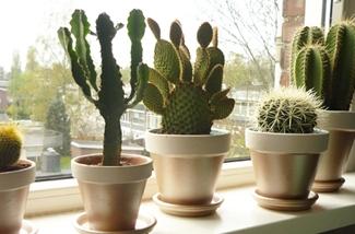 Binnenkijken interieur: Planten groeperen