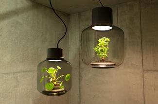 Planten donkere ruimte