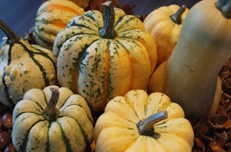 Blog: Pompoenen en Kalebassen tijd