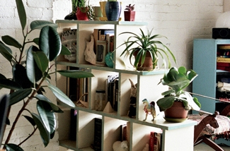 Blog: Roomdividers van planten