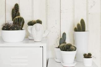 Stylingideeen met de cactus
