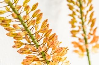 Feestelijke tafelstyling met stijlvolle bloemen