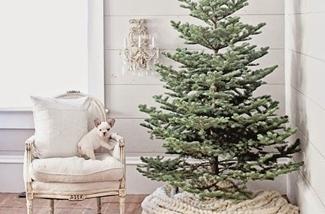 Blog: Kerstwereld