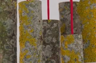 Blog: Lamp van een boomstam