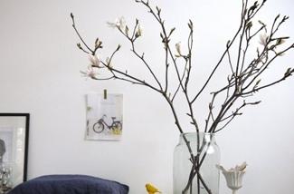 Liefde voor de magnolia