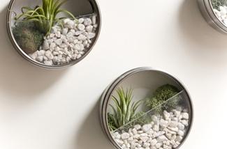Blog: Terrarium met planten