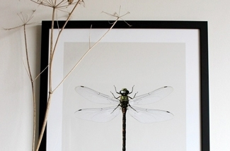 Vrijwillig mooie insecten in huis