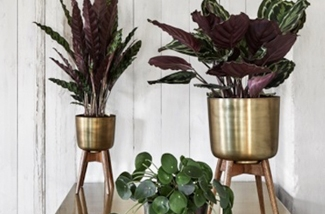 toffe-plantenstandaards-kl.jpg