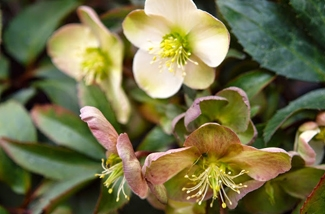 Blog: Tuinplant